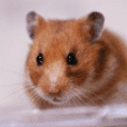 Use everyday! Hamster Photo Sticker Sumi