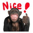 Chimpanzee Sticker3