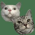 unacorn cats