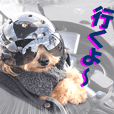 The Motorcycle dog TINA