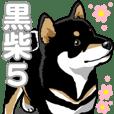 Daily Black Shiba Inu 5