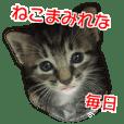 猫の写真スタンプ ねこまみれな毎日