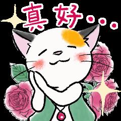 三毛貓蜜奇的日常生活