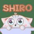 น้องแมวชิโระ