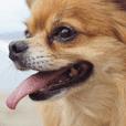Atami Dog ICHIOKUN