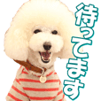 doggiesfan7