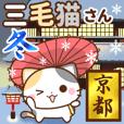Kyoto calico cat winter version