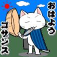 Cat wanderer