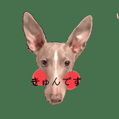 犬のスタンプII