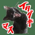 黒猫ツイン