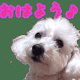 maruchan_shika