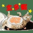 Cats TNR