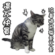 貓奴必備 貓咪翻譯機 第二彈 惡貓來襲