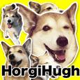 Horgi Hugh