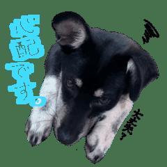 保護犬マロ