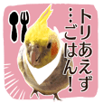8 colors, cockatiel sticker