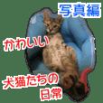 写真!カワイイ犬猫たちの日常 写真編