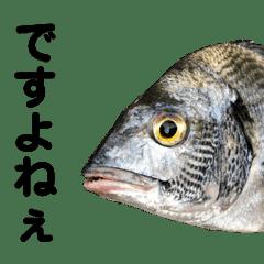 ひびき水産 スタンプ2(敬語編)