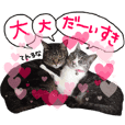 My cat Sticker for lovers.