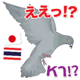 Hello Hato Play01