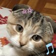 三毛猫ももちゃん4 英語ver.