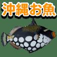 Okinawa's saltwater fish