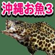 沖縄お魚3