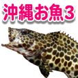 Okinawa's saltwater fish 3