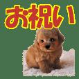 組み合わせ子犬1【お祝い編】