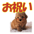 Combination puppy1 celebration