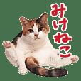 三毛猫りんちゃんスタンプ