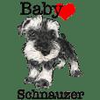 Baby Schnauzer