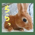 うさぎのピーチくん3歳〜NEW実写スタンプ〜