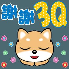 Q柴犬-很日常3