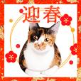 猫たちから年末年始の可愛いご挨拶♪2021