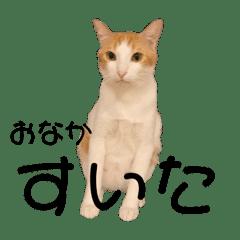 犬と猫 シンプル