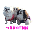 Pekingese three sisters