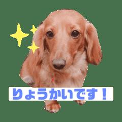佐藤家のココちゃん1