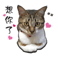 Cute cat na