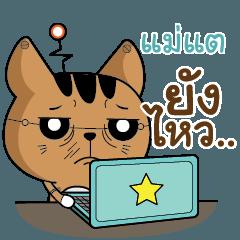 MATAE The Salary Robot cat