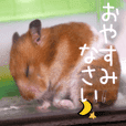 (Second edition)Hamster Sticker Sumire
