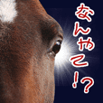 Horse Sticker OSAKA part.2