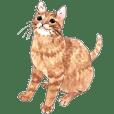 ハッピー保護猫スタンプ