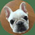 Frenchbulldog healing goo-chan