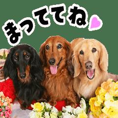 ミニチュアダックス日常スタンプ☆2☆