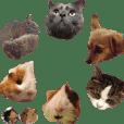 モルモットとデグーと犬と猫