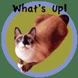 Vichien Mas The Cat