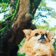 Atami Dog ICHIOKUN Vol.02