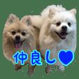 Pomeranian Leo and max