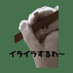 山田家猫ちゃんず3
